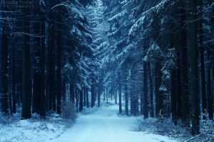 winter_walk_by_aljoschathielen-d5t4sx4