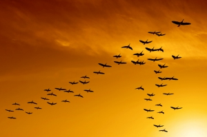 flok-of-birds-v-formation